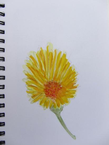 Aquarelles - Fleurs -Soucis