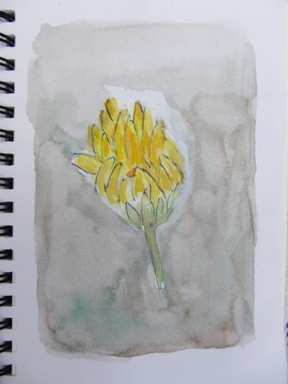 Fleurs - Soucis en bouton