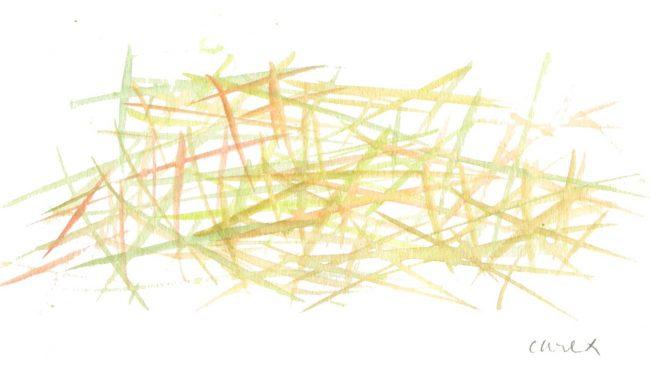 Carex - Motif végétal - Aquarelle